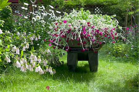 Wheelbarrow full of flowers in garden Stock Photo - Premium Royalty-Free, Code: 673-06964880