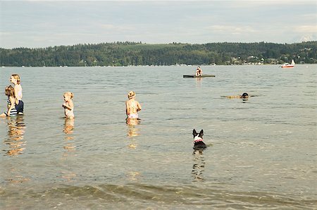 dog in heat - Spending a summer day in the water Stock Photo - Premium Royalty-Free, Code: 673-02139163