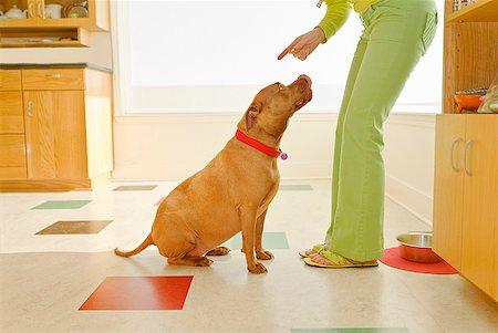 Woman scolding dog Stock Photo - Premium Royalty-Free, Code: 673-02143647