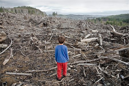 Young boy looking out at cleared landscape of fallen trees Stock Photo - Premium Royalty-Free, Code: 673-02801430