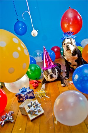 special event - dogs in party hats with balloons Stock Photo - Premium Royalty-Free, Code: 673-03826598