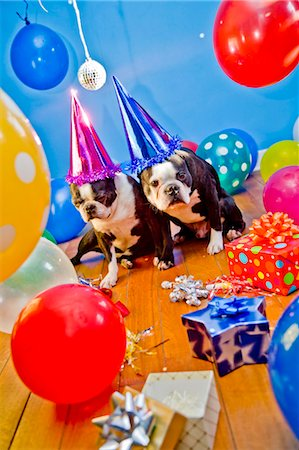 special event - dogs in party hats with balloons Stock Photo - Premium Royalty-Free, Code: 673-03826605