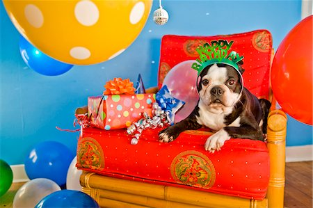 special event - dog on red chair with ballooons Stock Photo - Premium Royalty-Free, Code: 673-03826609
