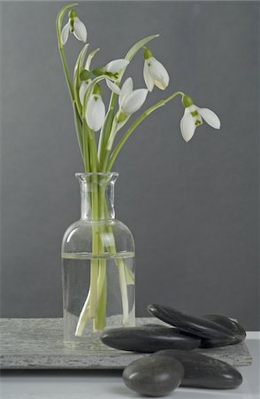 decorations - Snowdrops in a vase and stones Stock Photo - Premium Royalty-Free, Code: 689-05610444