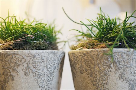 Houseplants in flowerpots Stock Photo - Premium Royalty-Free, Code: 689-05610566