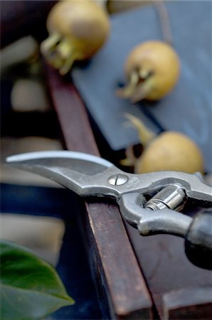 Garden shears and fruits Stock Photo - Premium Royalty-Free, Code: 689-05610878