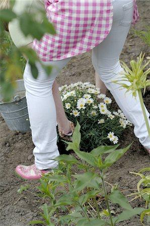 plant (botanical) - Woman planting Marguerite Stock Photo - Premium Royalty-Free, Code: 689-05611190
