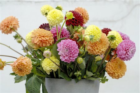 Bunch of flowers with Dahlia Stock Photo - Premium Royalty-Free, Code: 689-05611572