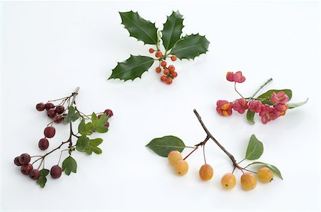 Assortment of berries Stock Photo - Premium Royalty-Free, Code: 689-03733361