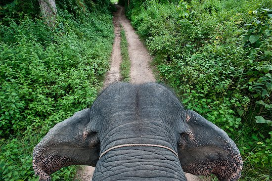 First person view of riding elephant in forest in Pai, Northern Thailand, Thailand. Stock Photo - Premium Royalty-Free, Image code: 682-05977433
