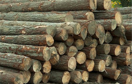 A wood pile at a sawmill. Western Cape Province, South Africa. Stock Photo - Premium Royalty-Free, Code: 682-06374173
