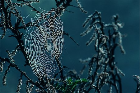 Spider's Web with Dew Stock Photo - Premium Royalty-Free, Code: 682-02890207