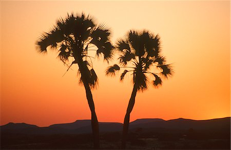 A Couple of Silhouetted Palm Trees at Sunset Stock Photo - Premium Royalty-Free, Code: 682-02892776