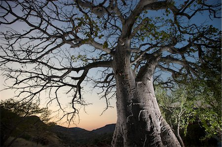 dependable - Floodlit Baobab tree next to Epupa Falls, Kunene River, Kaokoland, Namibia Stock Photo - Premium Royalty-Free, Code: 682-03285678
