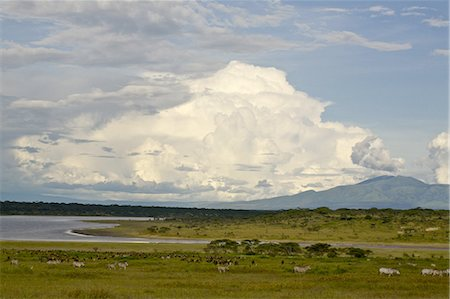 serengeti national park - View across Lake Ndutu to Mount Lemagrut, Serengeti, Tanzania Stock Photo - Premium Royalty-Free, Code: 682-03734725