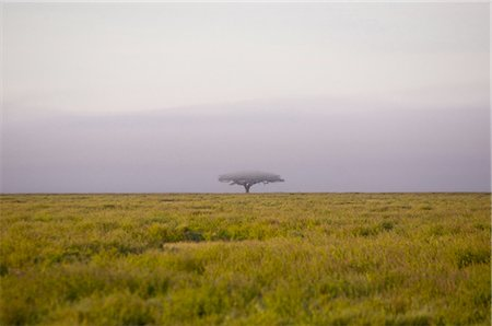 serengeti national park - Early morning mist on Serengeti plains, Tanzanoa Stock Photo - Premium Royalty-Free, Code: 682-03734727