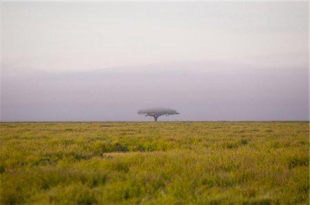 serengeti national park - Early morning mist on Serengeti plains, Tanzanoa Stock Photo - Premium Royalty-Free, Code: 682-03734727