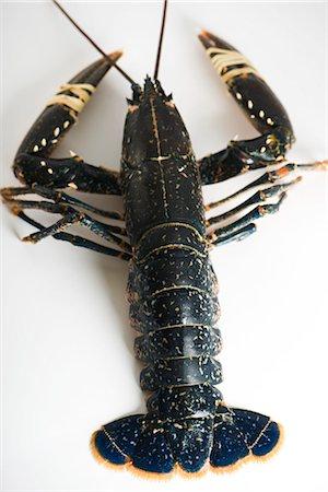 Fresh lobster Stock Photo - Premium Royalty-Free, Code: 695-05771765