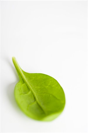 Baby spinach Stock Photo - Premium Royalty-Free, Code: 695-05771763
