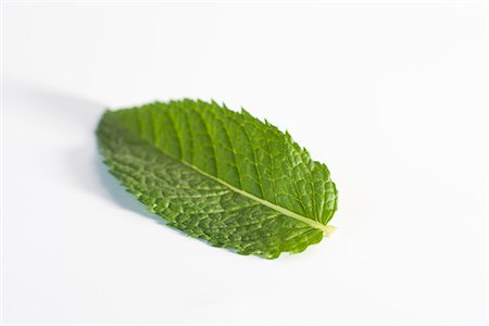 Mint leaf Stock Photo - Premium Royalty-Free, Code: 695-05780024