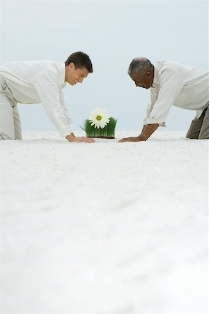Two men down on all fours in sand, both looking down at flower growing out of wheat grass Stock Photo - Premium Royalty-Free, Code: 695-03377795