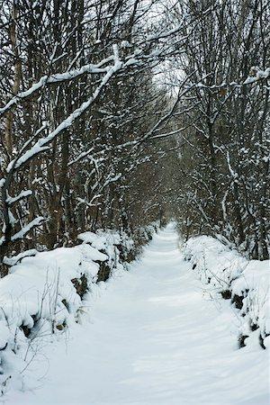 panoramic winter scene - Tree-lined path in snow Stock Photo - Premium Royalty-Free, Code: 695-03390557