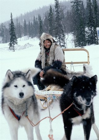 Sweden, man sitting on sled pulled by sled dogs Stock Photo - Premium Royalty-Free, Code: 696-03397260