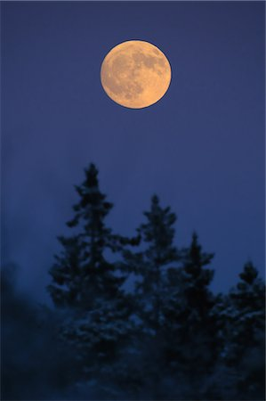 Scenic view of full moon on treetop in forest Stock Photo - Premium Royalty-Free, Code: 698-06374626