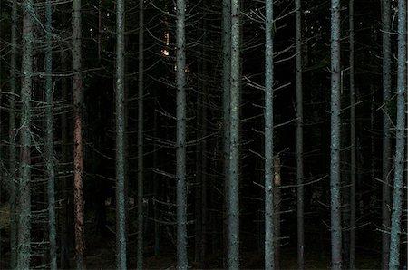 Bare tree trunks in dark forest Stock Photo - Premium Royalty-Free, Code: 698-06374706