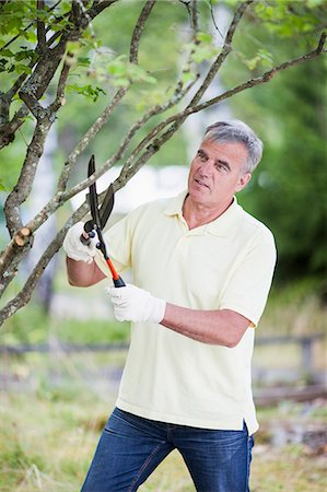 Senior man pruning branch of a tree with shears in garden Stock Photo - Premium Royalty-Free, Code: 698-06374945