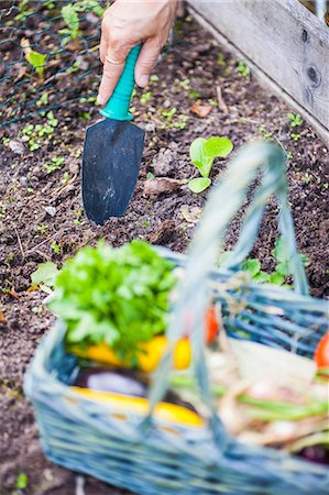 Cropped shot of woman's hand with trowel in vegetable garden Stock Photo - Premium Royalty-Free, Code: 698-06374942