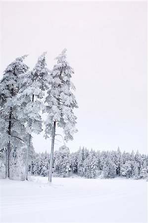 snow covered trees - Snow covered landscape and trees against clear sky Stock Photo - Premium Royalty-Free, Code: 698-06375087
