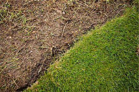 dirt - Grass turf and soil in formal garden Stock Photo - Premium Royalty-Free, Code: 698-06375484