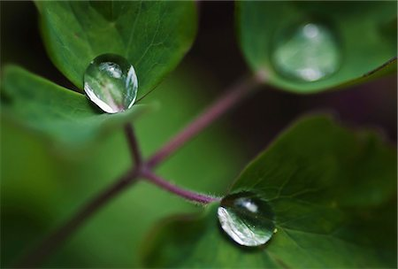 droplet - Selective focus of droplets on leaf Stock Photo - Premium Royalty-Free, Code: 698-06443889