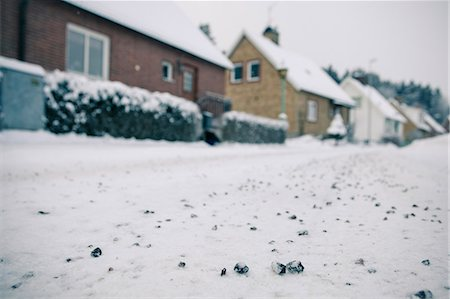View of snow-covered street with houses in the background Stock Photo - Premium Royalty-Free, Code: 698-06616138