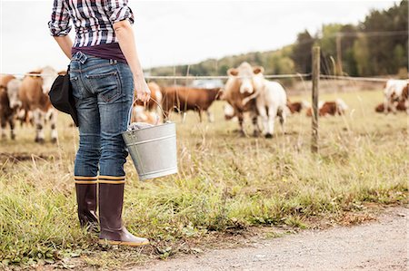 farmhand (female) - Low section of female farmer with bucket standing at field with animals grazing in background Stock Photo - Premium Royalty-Free, Code: 698-07439585