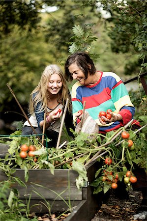 Grandmother and granddaughter harvesting tomatoes in garden Stock Photo - Premium Royalty-Free, Code: 698-07587929