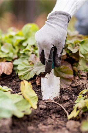 Cropped image of woman planting in garden Stock Photo - Premium Royalty-Free, Code: 698-07588147