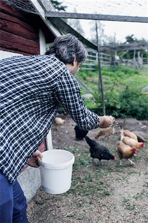 Man feeding chickens at poultry farm Stock Photo - Premium Royalty-Free, Code: 698-08007938