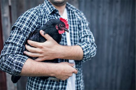 Midsection of man carrying hen at poultry farm Stock Photo - Premium Royalty-Free, Code: 698-08007940