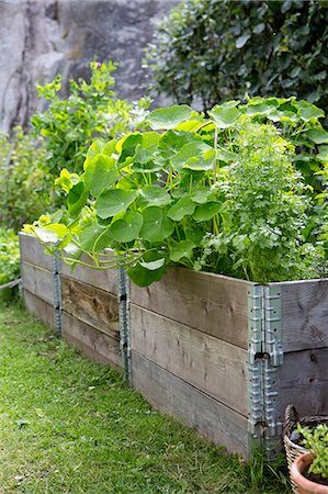 Plants growing in crates at vegetable garden Stock Photo - Premium Royalty-Free, Code: 698-08170842