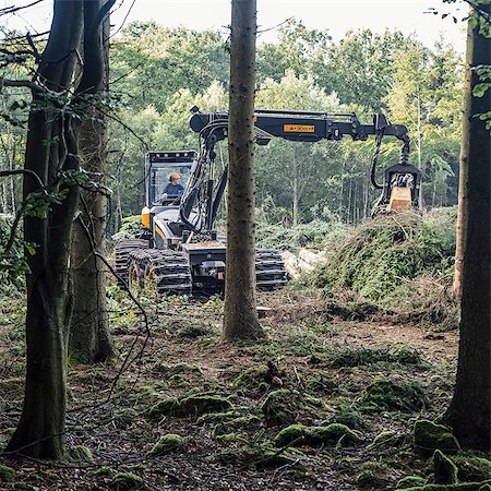 Earth mover lifting fallen tree in woodland Stock Photo - Premium Royalty-Free, Code: 698-08331058