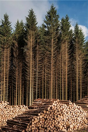 Stacks on logs against trees in forest Stock Photo - Premium Royalty-Free, Code: 698-08331059