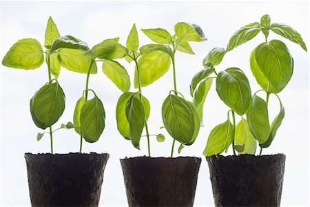 Row of potted plants against white background Stock Photo - Premium Royalty-Free, Code: 698-08331067