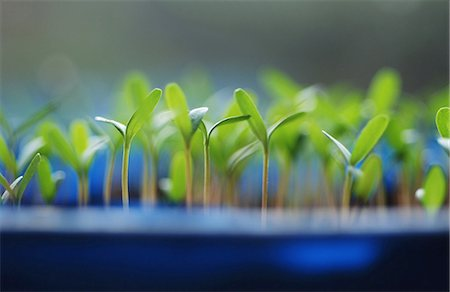 sprout - Plants Stock Photo - Premium Royalty-Free, Code: 698-03657111