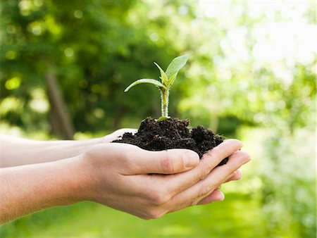 Plant in hand Stock Photo - Premium Royalty-Free, Code: 698-03657754