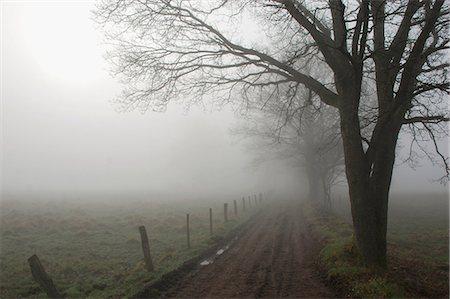 road landscape - Foggy road Stock Photo - Premium Royalty-Free, Code: 698-03671119