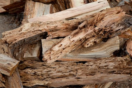 forestry - Close-up view of weathered driftwood Stock Photo - Premium Royalty-Free, Code: 693-05794378