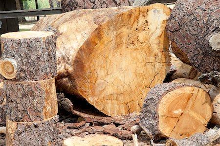 Chopped wooden logs Stock Photo - Premium Royalty-Free, Code: 693-05794394