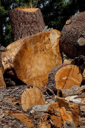 Chopped wood logs Stock Photo - Premium Royalty-Free, Code: 693-05794397